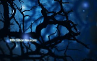 TN_Neurons